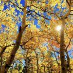 秋晴れ,メンタルヘルス